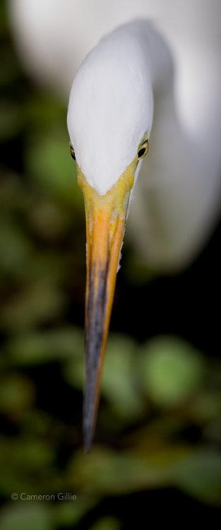 Cameron Gillie photo of corkscrew swamp sanctuary