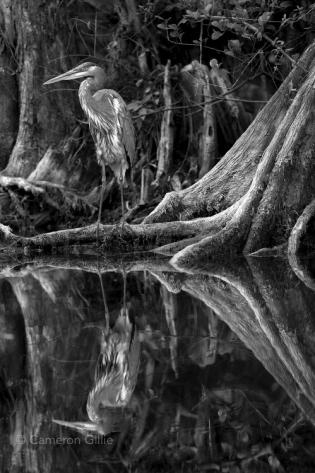 Loop Road Big Cypress National Preserve