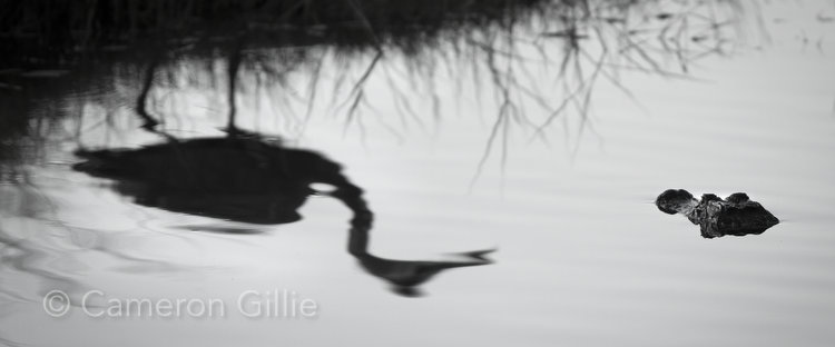 Nature photo taken in the Florida Everglades by Wisconsin Fine art photographer Cameron Gillie
