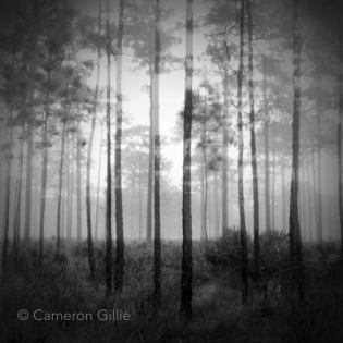 Pinhole photography double exposure.