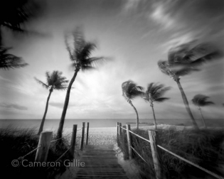 Pinhole photography from the beach in Key West, Florida. This is a five minute exposure giving the palms a dreamy look on a windy day.