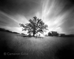 Pinhole photograph from Owen Conservation Park in Madison, Wisconsin.