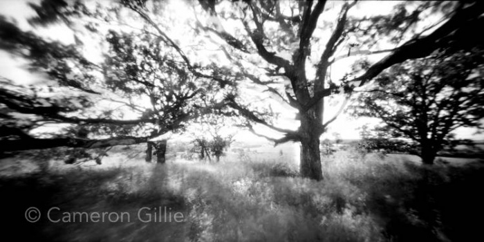 Pinhole photograph of trees by pinhole photographer Cameron Gillie