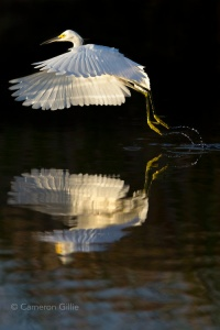 bird photography will be one of the main highlights of the Everglades Photography Workshop
