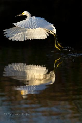 ten thousand islands national wildlife preserve florida, Fakahatchee Strand.