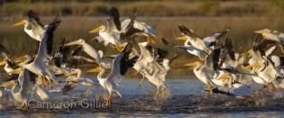 ten thousand islands national wildlife preserve florida
