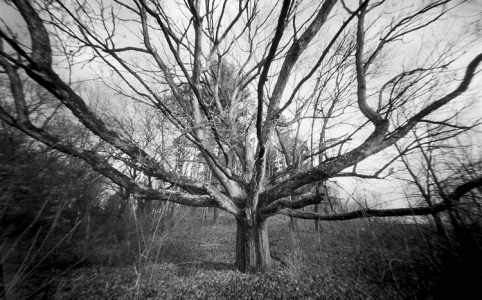 a pinhole photograph of An old oak tree on the old ice age trail
